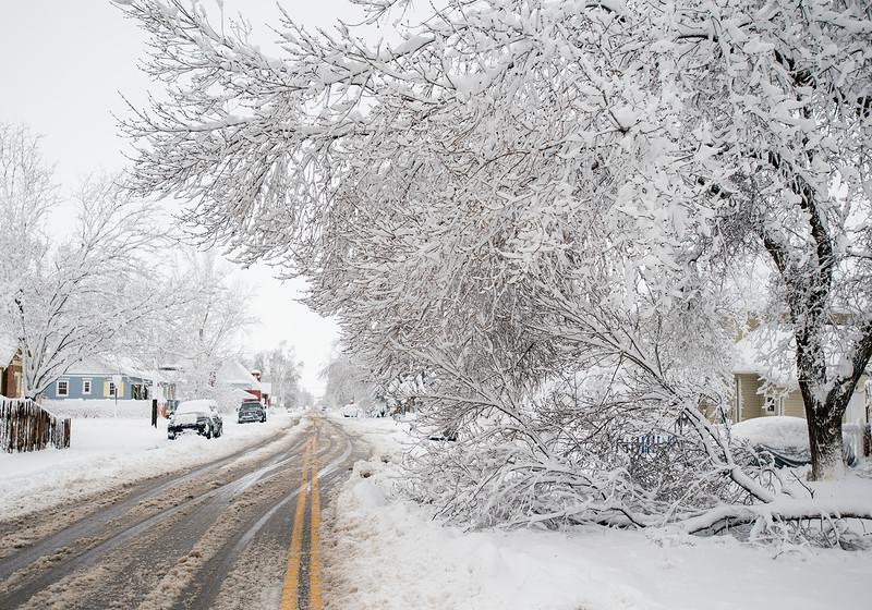 0323 NWS Blizzard_TreeOnWashington_10-mb