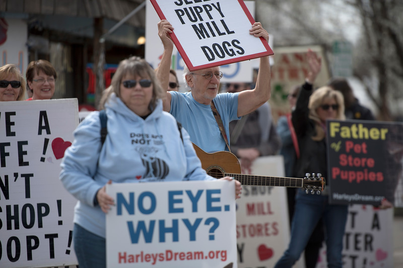 "Peter Yarrow joined the protest on Saturday, March 25, 2017 at the corner of Cleveland and 1st St. in downtown Loveland saying ""Its not just about puppies, it's about the entire human race."""