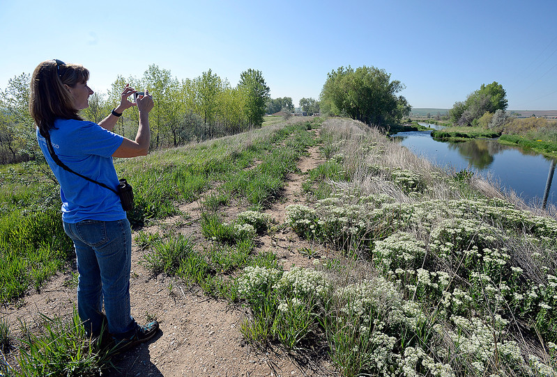 Debbie Eley, open lands specialist for the city of Loveland, takes a photo on her phone Friday, May 12, 2017, of the Big Thompson River in the city's new open space on east First Street near New Vision Elementary School.  (Photo by Jenny Sparks/Loveland Reporter-Herald)