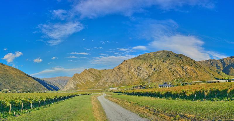 Gibbston Valley Vineyard