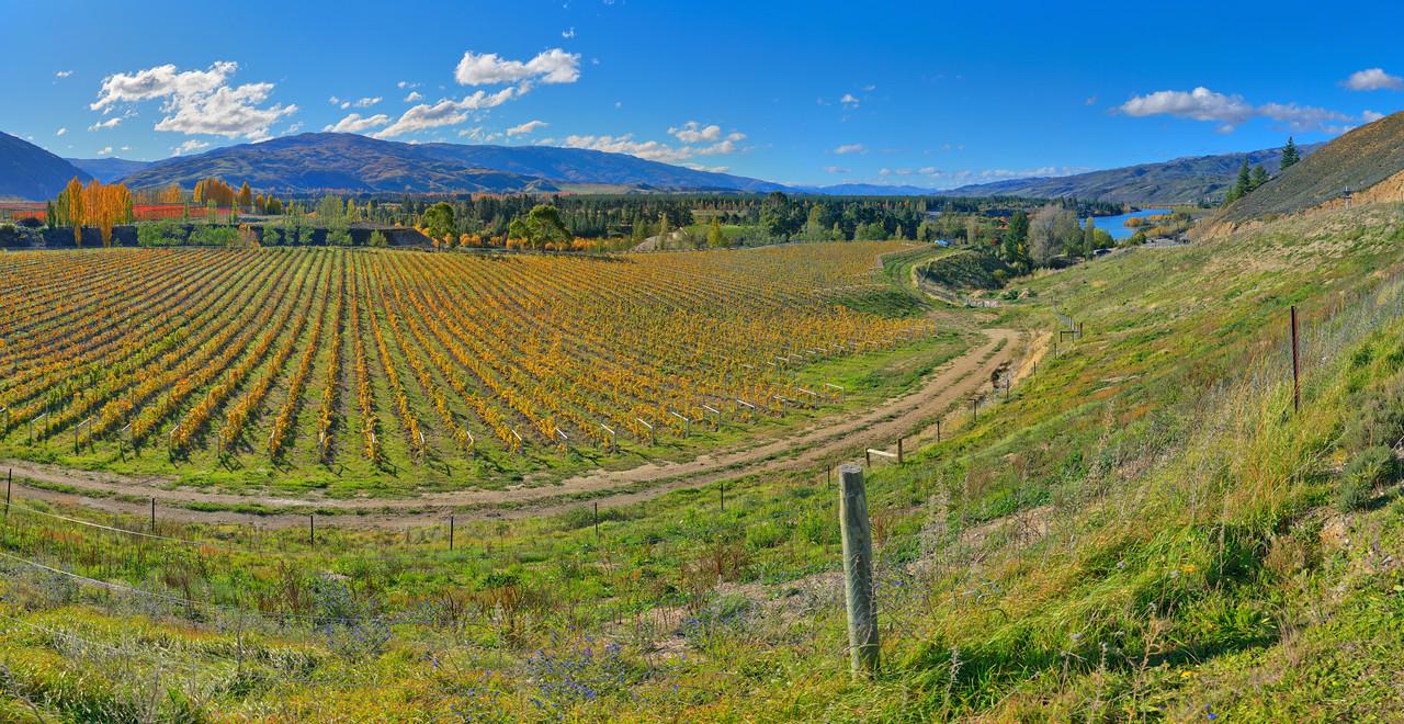Mt Difficulty Vineyard