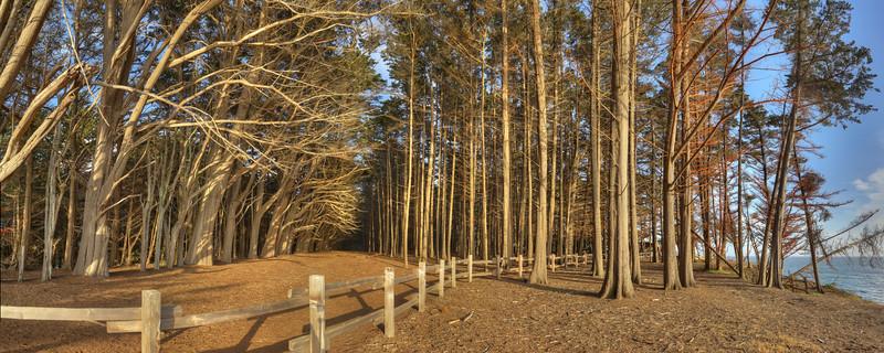 Moss Beach Woods
