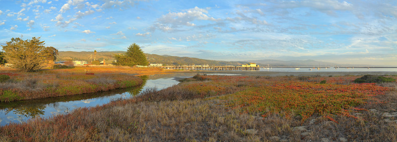 Pillar Point Marsh #1