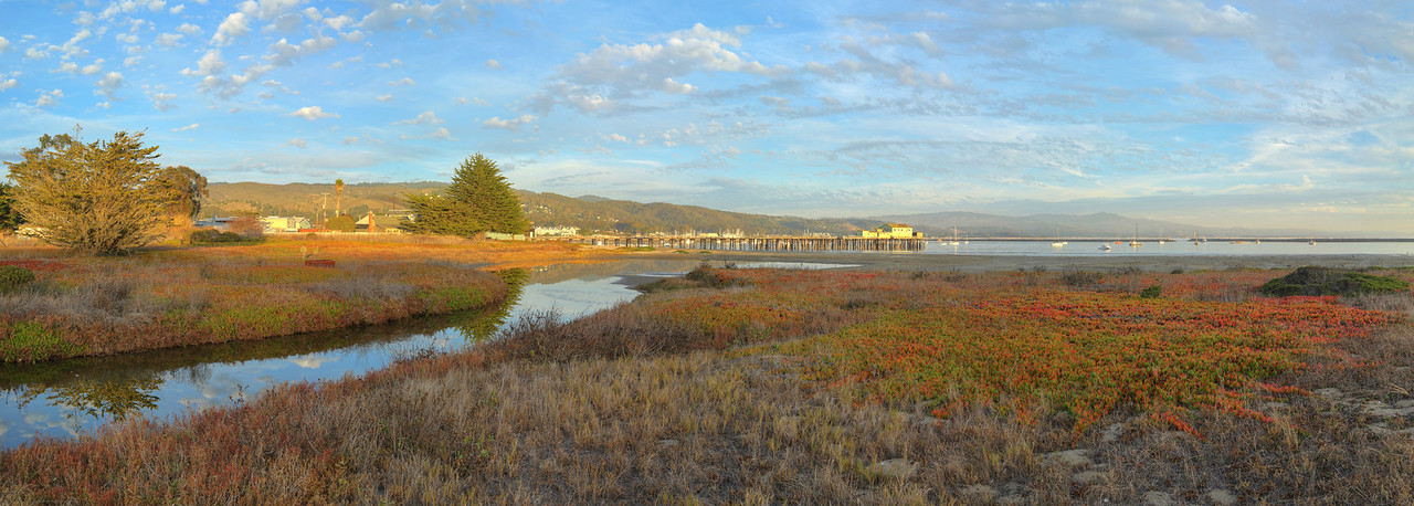 Pillar Point Marsh #1