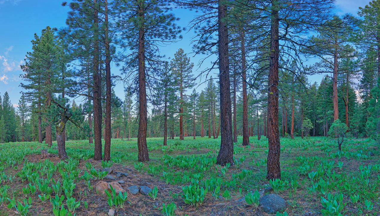 Nordic Woods, Tahoe City, CA