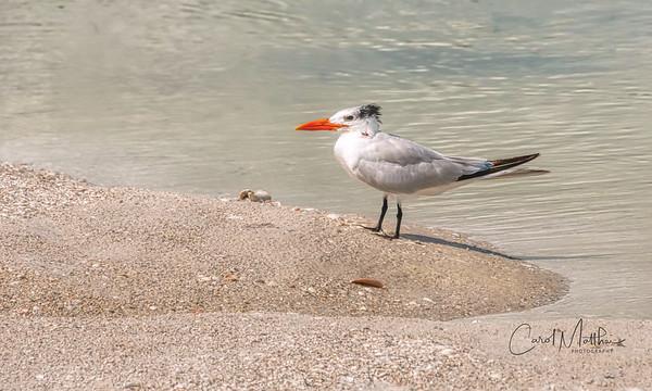 tern stands alone