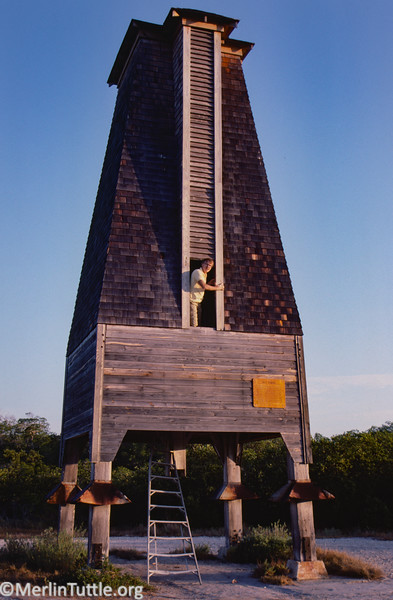 Merlin Tuttle inspecting one of the Campbell bat houses built for mosquito control. This one is now an historic site in the Florida keys. It failed to attract bats, likely for lack of insect diversity. Bats wouldn't have had sufficiant alternative food between hatches of mosquitoes. Bat Houses