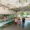 As a teacher interested in nature, Thrash (Heng-Chia Chang) became fascinated by golden bats he found roosting in his school yard. When he learned they were rare and declining, he organized community participation to make the Sheng-zheng Elementary School a special bat sanctuary.  His whole school got involved, and they now host The Home of The Golden Bat museum, visited by 20,000 people annually, and 120 occupied bat houses on the premises. Conservation