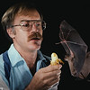 Merlin Tuttle calling a trained Cave nectar bat (Eonycteris spelaea) to his hand in 1981, in preparation for photography in Thailand.