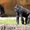 Memphis Zoo