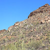Saguaro National Park, AZ