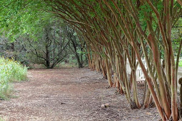 Botanical Garden, Huntsville, AL