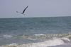 Botany Bay South Carolina Beach Joan Perry