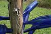 Cypress Gardens Moncks Corner SC Joan Perry