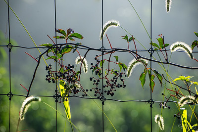 Orchard fence