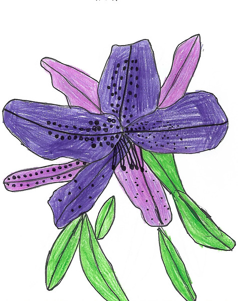 Drawing of a State Flower