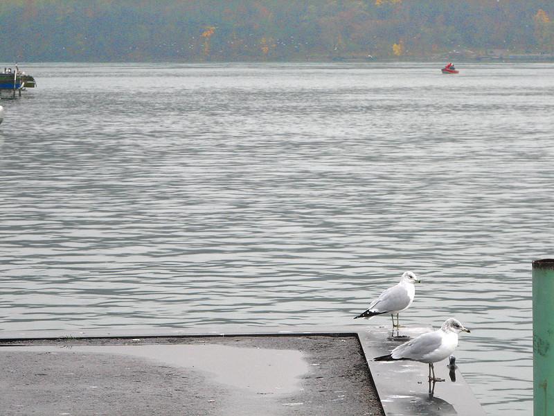 Niagara River Nov 14 297 1200w