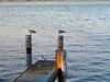 Birds Nov 11_ 025 1024w