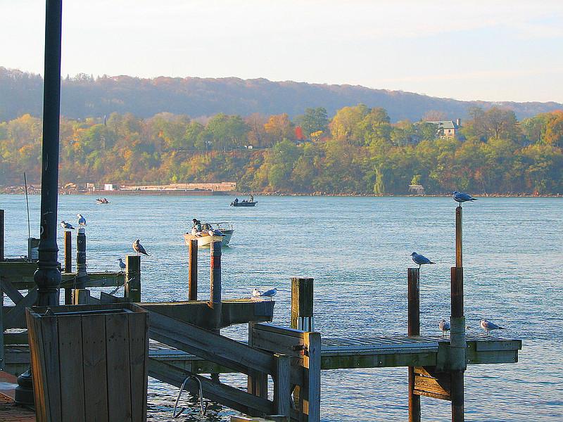 Birds watching Nov 11_ 024 1024w