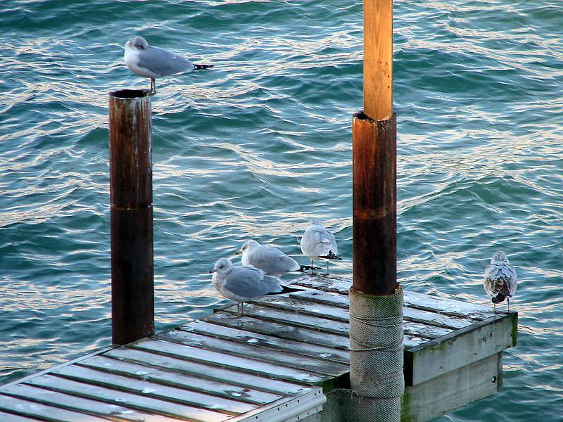 Cold birds Nov 11_ 006 1024w