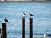 Cold Birds Nov 11_ 026 1024w
