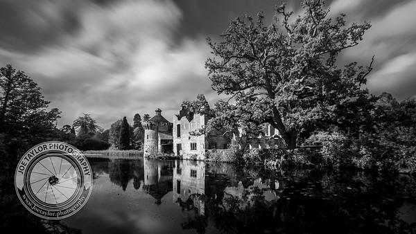 Scotney Castle Tree