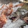 Ribarsko Selo Restaurant - Fish