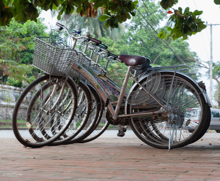 Bicycle for Rent