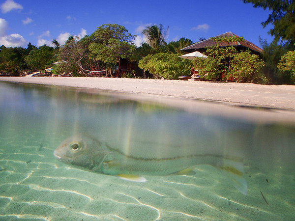 Wakatobi - Sulawesi - Indonesia