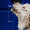 40luca dog portrait corshamTWOA1374