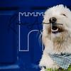 44luca dog portrait corshamTWOA1399
