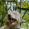 23luca dog portrait corshamTWOA0960