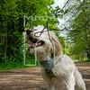 30luca dog portrait corshamTWOA1091