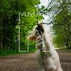 31luca dog portrait corshamTWOA1105