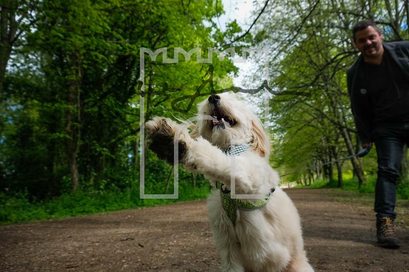 32luca dog portrait corshamTWOA1106