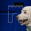 38luca dog portrait corshamTWOA1336