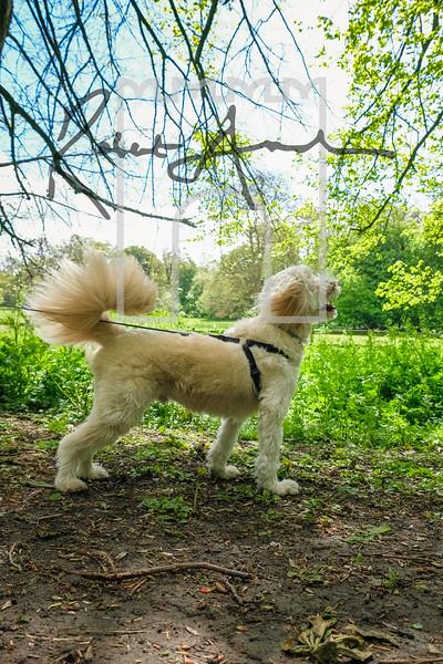 28luca dog portrait corshamTWOA1051