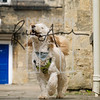 37luca dog portrait corshamTWOA1273