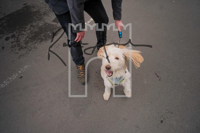 33luca dog portrait corshamTWOA1149