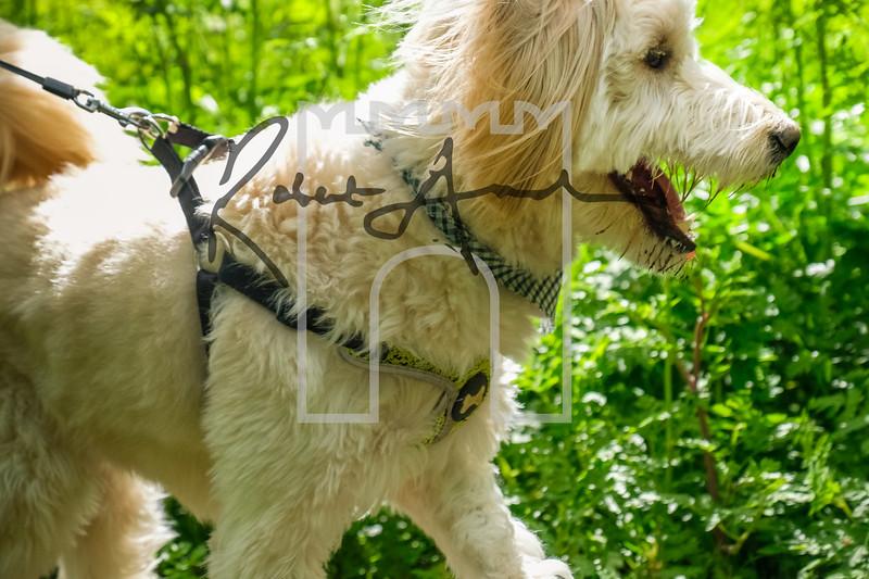 16luca dog portrait corshamTWOA0845