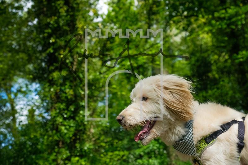 26luca dog portrait corshamTWOA1002