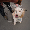 34luca dog portrait corshamTWOA1165