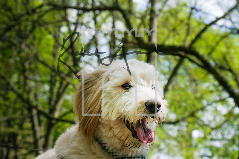22luca dog portrait corshamTWOA0958