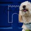 43luca dog portrait corshamTWOA1395