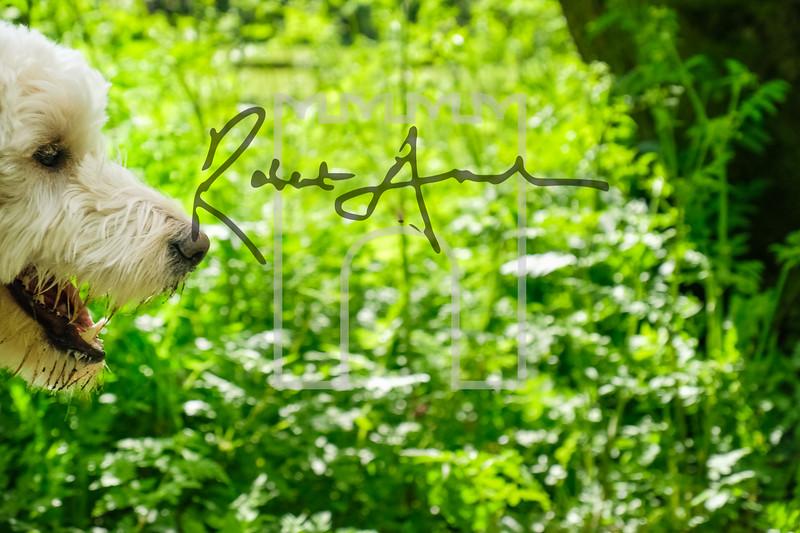 17luca dog portrait corshamTWOA0847