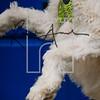 41luca dog portrait corshamTWOA1378