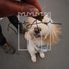35luca dog portrait corshamTWOA1169