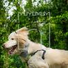 27luca dog portrait corshamTWOA1005