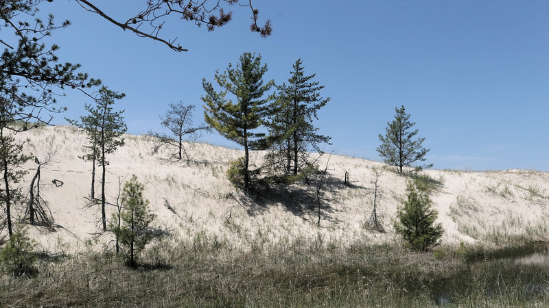 Trees on a Dune