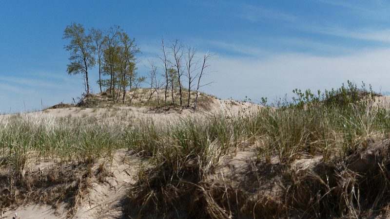 Grass, Dune, Trees